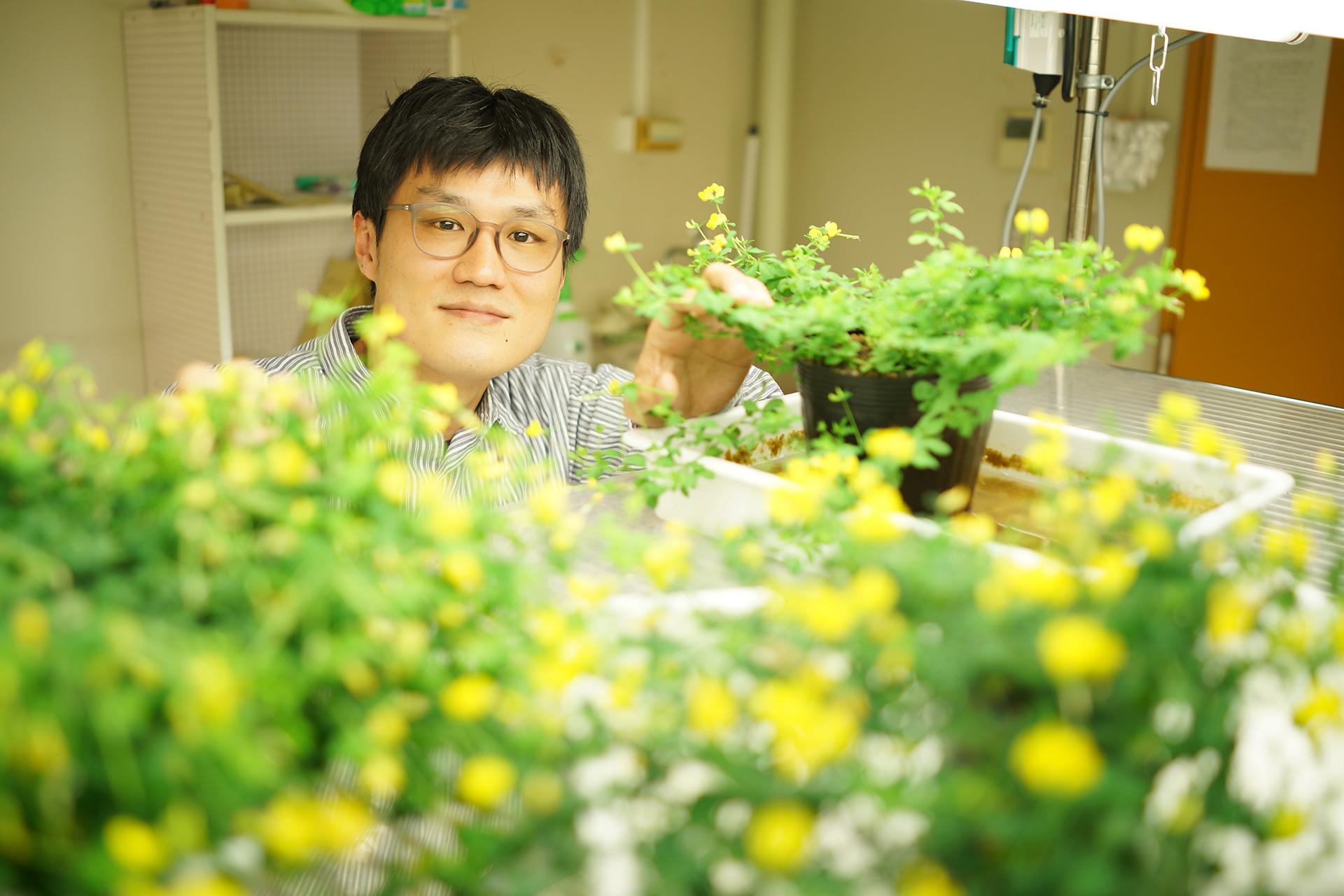 微生物との共生をヒントに植物の環境適応の仕組みを理解する